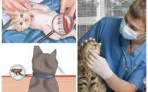 Làm thế nào để thoát khỏi bọ chét trong một con mèo hay mèo ở nhà