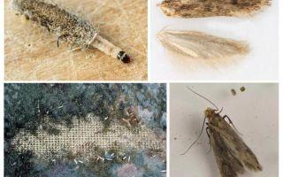 Phải làm gì nếu một nốt ruồi bắt đầu trong một chiếc áo khoác lông chồn