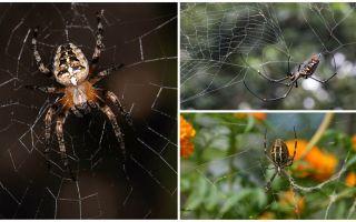 Do nhện biết làm thế nào để bay