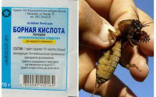 Những gì để đầu độc Medvedka trong vườn