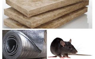 Loại vật liệu cách nhiệt nào không ăn chuột và chuột