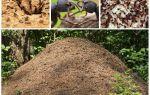 Cuộc sống của kiến trong một anthill