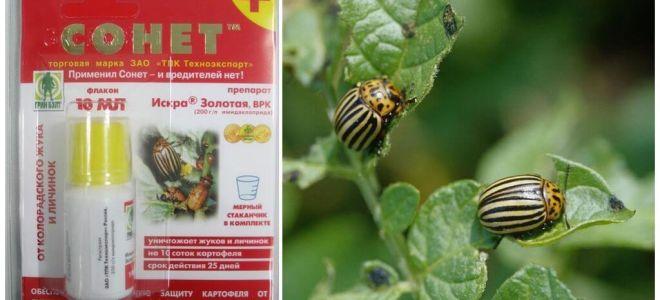 Biện pháp khắc phục cho bọ khoai tây Colorado Sonnet