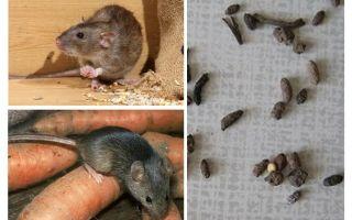 Làm thế nào để đối phó với những con chuột trong một ngôi nhà riêng