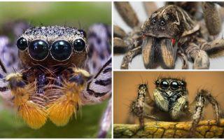 Một con nhện có bao nhiêu con mắt?
