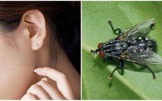 Làm thế nào để có được một bay ra khỏi tai của bạn ở nhà