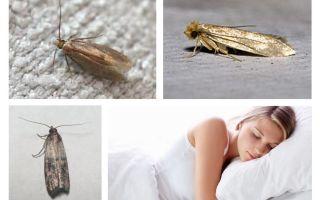 Những giấc mơ sâu bướm