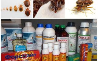Chất độc cho rệp ở nhà