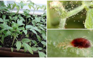Phương pháp xử lý bọ ve nhện trên cây con