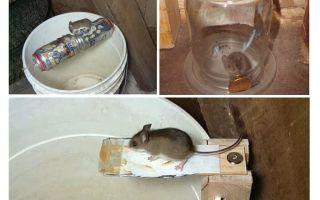 Làm thế nào để làm một cái bẫy chuột bằng tay của chính bạn