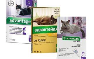 Advantage flea giọt cho mèo