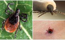 Một vết cắn đánh dấu trông như thế nào trên cơ thể, ảnh và triệu chứng của một người
