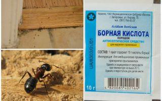 Làm thế nào để loại bỏ kiến từ một ngôi nhà bằng gỗ