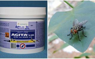 Việc sử dụng Agita từ ruồi