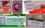Các loại thuốc tốt nhất để điều trị Giardia ở người lớn