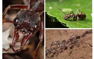 Tất cả về kiến