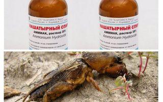 Amoniac từ medvedki