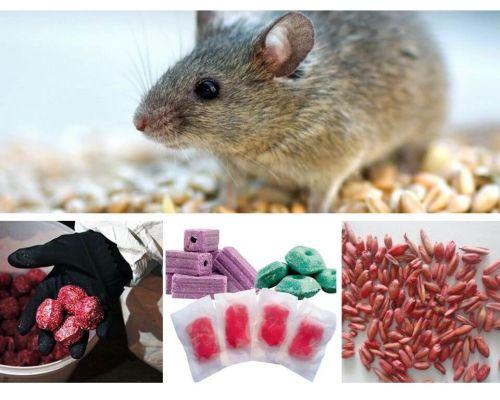 Chất độc cho chuột và chuột