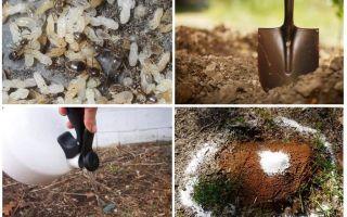 Làm thế nào để có được kiến ra khỏi các biện pháp dân gian vườn