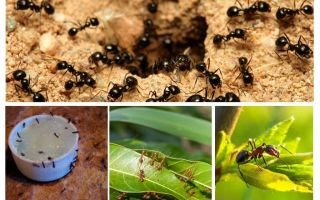 Những con kiến sợ