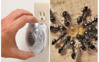 Hiệu quả siêu âm ant repeller