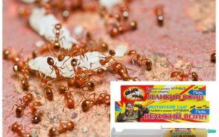 Biện pháp khắc phục Great Ant Warrior