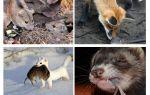 Ai ăn chuột