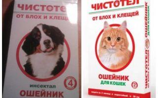 Flea celandine cổ áo cho mèo và chó