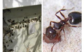 Kiến sống trong vật liệu cách nhiệt