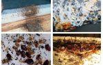 Làm thế nào để độc lập tìm thấy một tổ của bedbugs trong căn hộ