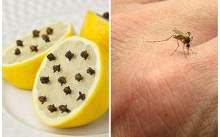 Chanh với tép muỗi cho trẻ em và người lớn