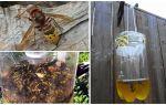 Bẫy tự chế cho sừng và ong bắp cày