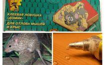 Keo dán từ chuột