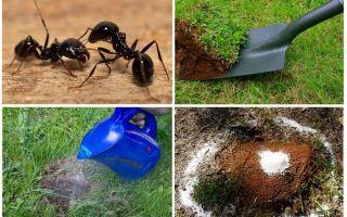 Làm thế nào để loại bỏ kiến trong các biện pháp khắc phục dân gian trong vườn