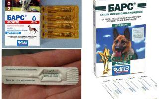 Thả Forte Leopard cho chó con và chó