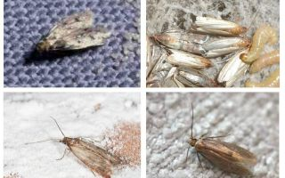 Làm thế nào để vĩnh viễn loại bỏ nốt ruồi trong căn hộ và nhà