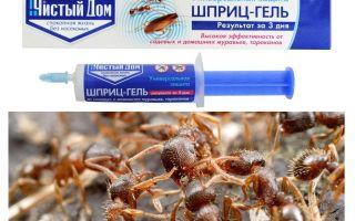 Nhà Ant Pure