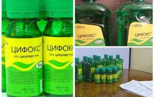 Cyclox khắc phục cho bedbugs