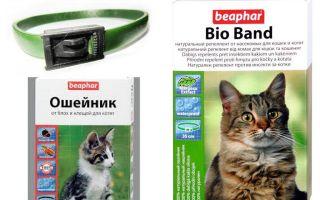 Cổ áo Beafar từ bọ chét cho chó và mèo