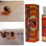 Forsyth từ bedbugs