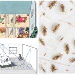Habitat bọ chét trong nhà