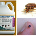 Tetriks từ bedbugs