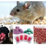 Các dạng ngộ độc chuột