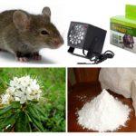 Phương pháp xử lý chuột