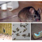 Sự hiện diện của những con chuột trong căn hộ