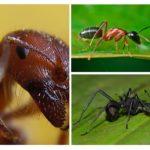 Ant đóng lên