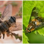 Gadfly và gadfly