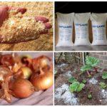 Cách chiến đấu với bọ khoai tây Colorado