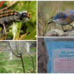 Cách để chống sâu bướm