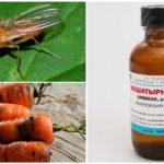 Amoniac từ cà rốt bay